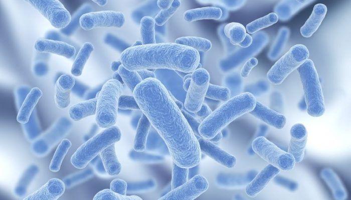 Bacteria 700×400